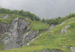 Black bear on the hill
