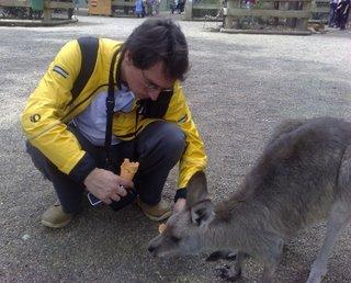 Charles feeding a kangaroo