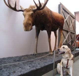 Miguel and the Moose