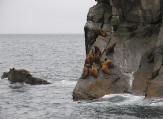Sea Lions perched on a rocky cliff
