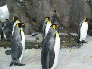 Penguins from the Auckland Aquarium